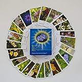 Bachblüten-Karten: Karten - Deutsch. Blüten als Chance und Hilfe: Kartenset mit allen 39 Bachblütenfotos