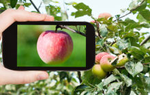 Mit der #App Schadstoffe in Äpfeln aufspüren