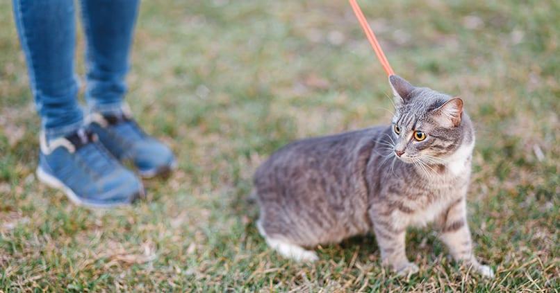NABU fordert: Haustiere müssen endlich an die Leine!