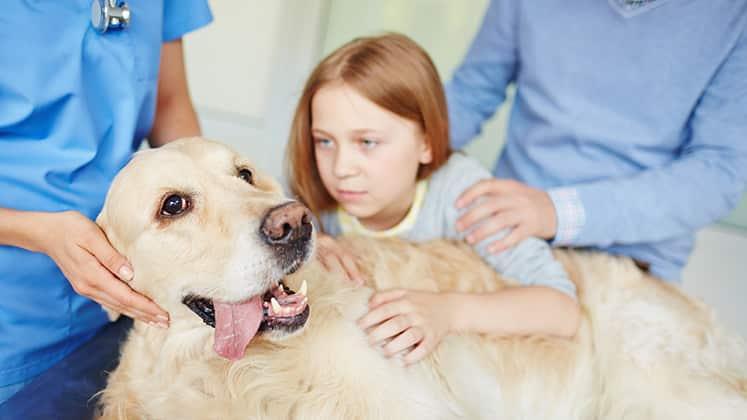 So sehr leiden Haustierbesitzer, wenn ihr Tier krank ist