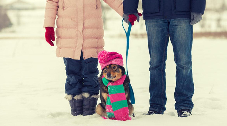 So wird der Winterspaziergang mit dem Hund ein Vergnügen