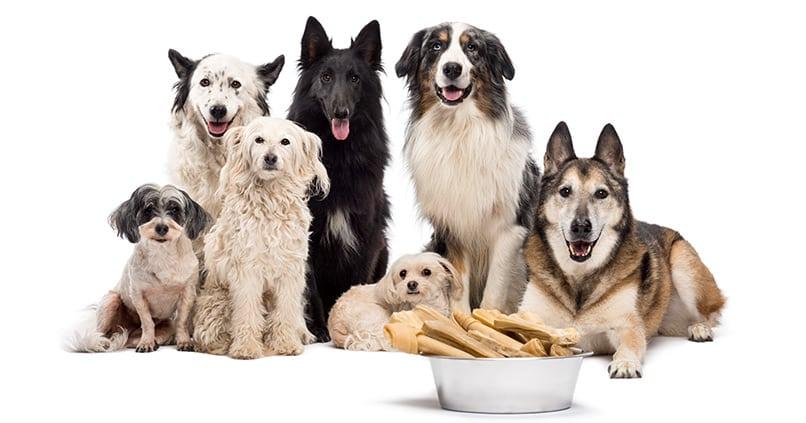 Welche Hunderasse eignet sich besonders für Anfänger?