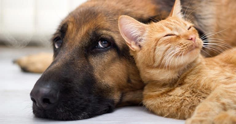 Hund und Katze unter einem Dach - so klappt es mit dem friedlichen Zusammenleben