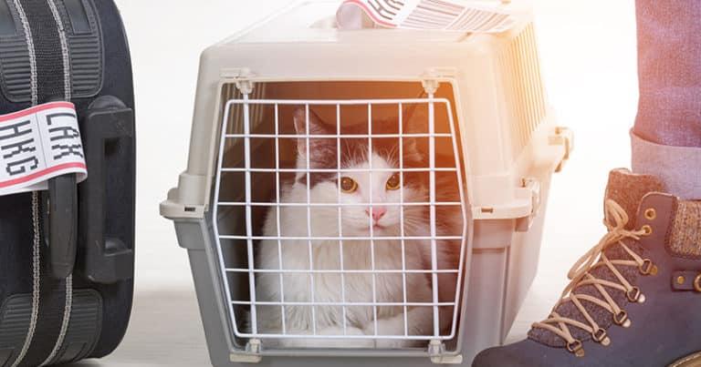Flugreisen mit Haustieren - das sollten die Halter beachten