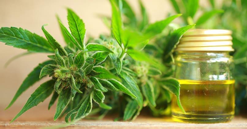 Hanföl und CBD Öl - wie wirken diese Öle auf die Gesundheit?