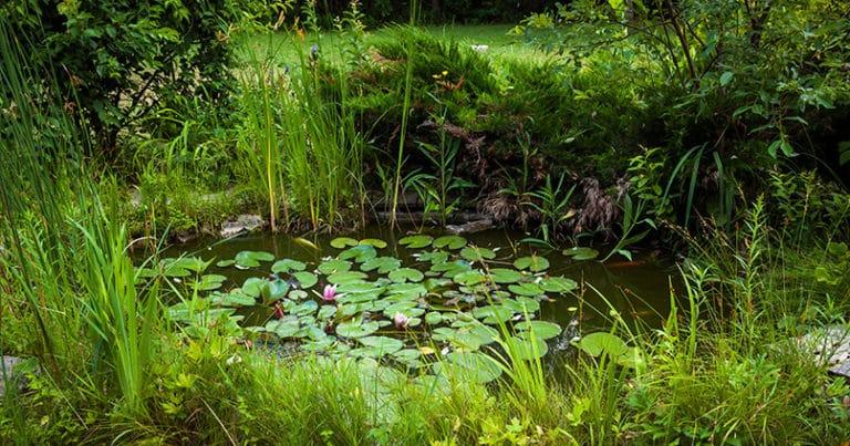 Wasserpflanzen im Gartenteich richtig einsetzen