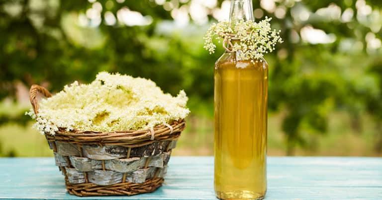 Holunderblüten Likör - das perfekte Geschenk für Feinschmecker