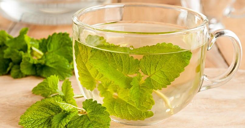 Zitronenmelisse Tee bei Schlafstörungen - kann die Heilpflanze tatsächlich helfen?