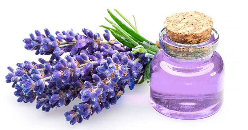 So wirken die Inhaltsstoffe im Lavendelöl gegen Hautkrankheiten