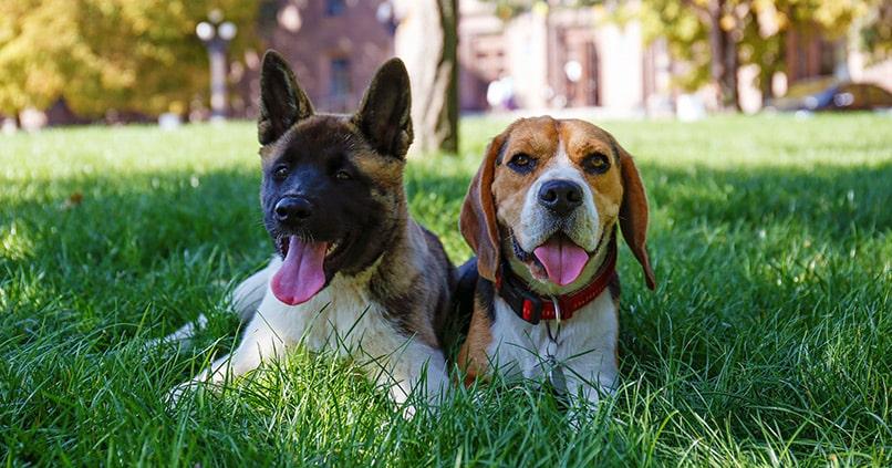 Versicherungen für den Hund: Welche sind Sinnvoll?