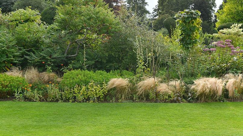 Die Vorteile von Trockenrasen gegenüber normalem Rasen