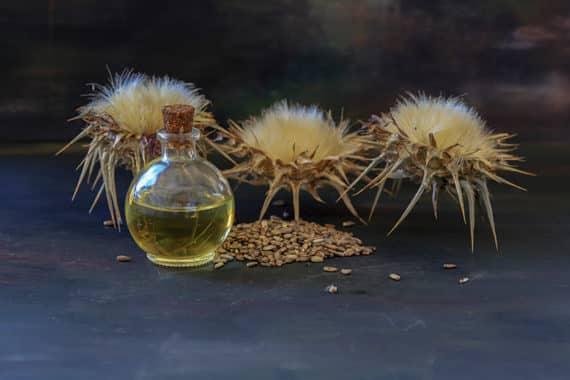 Mariendistelöl für die Verdauung - immer eine gute Wahl
