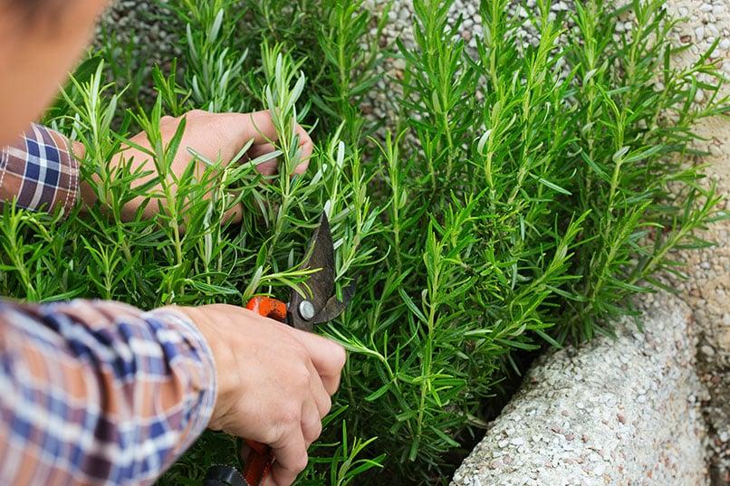 So einfach lässt sich ein Kräutergarten anlegen