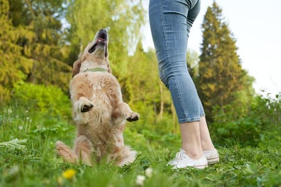 So klappt es mit der Erziehung des Hundes