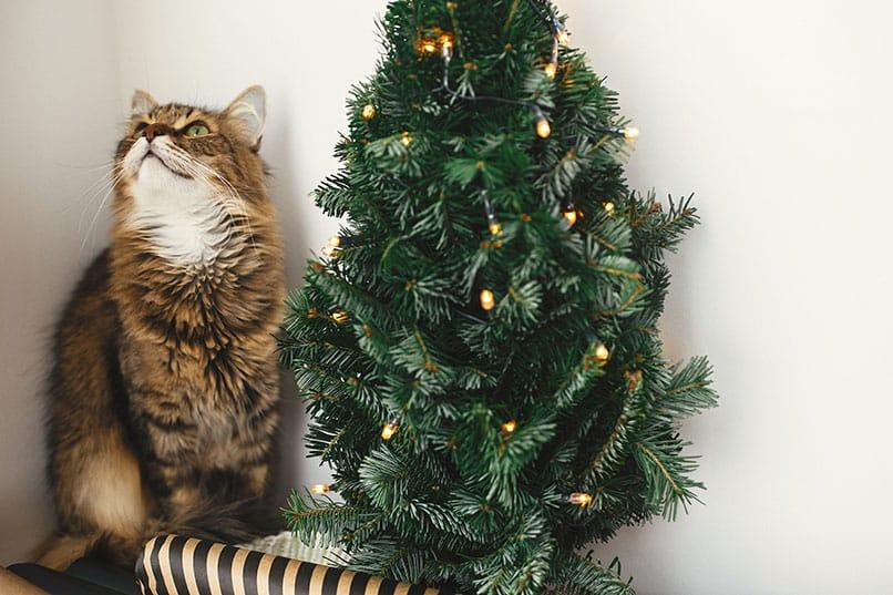 Sollte das Futter für Katzen im Winter anders sein als im Sommer?