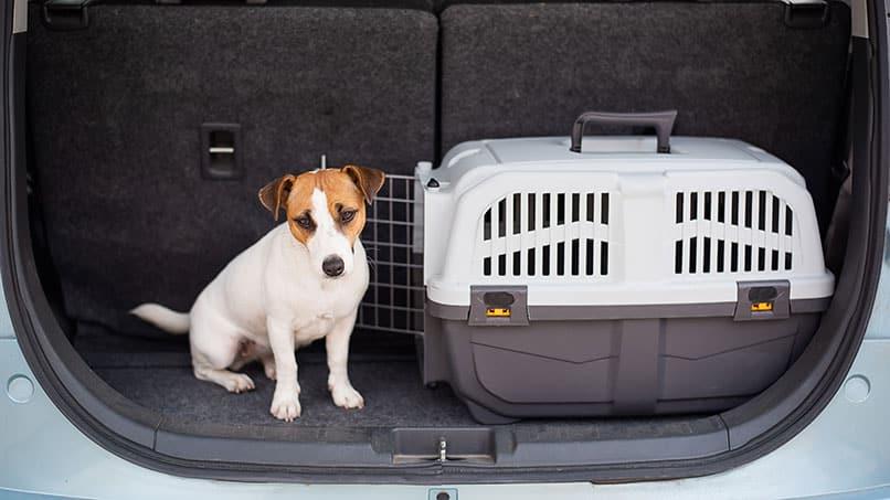 Wie lässt sich der Hund an die Transportbox gewöhnen?